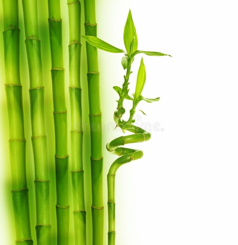 bamboo граница стоковое изображение
