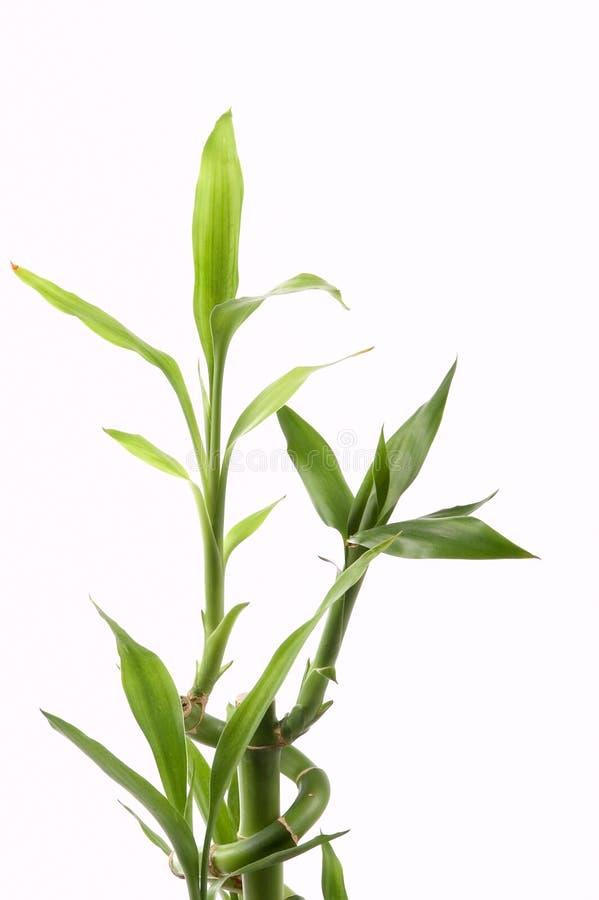 Bamboo деталь Стоковые Фото