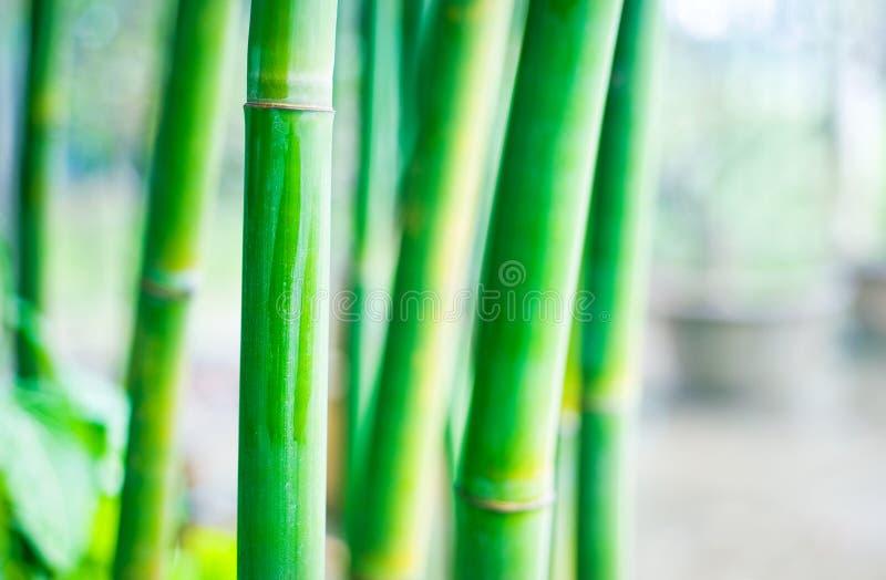 bamboo Дзэн стоковая фотография rf