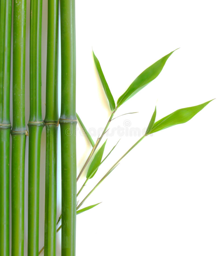 bamboo Дзэн стоковая фотография