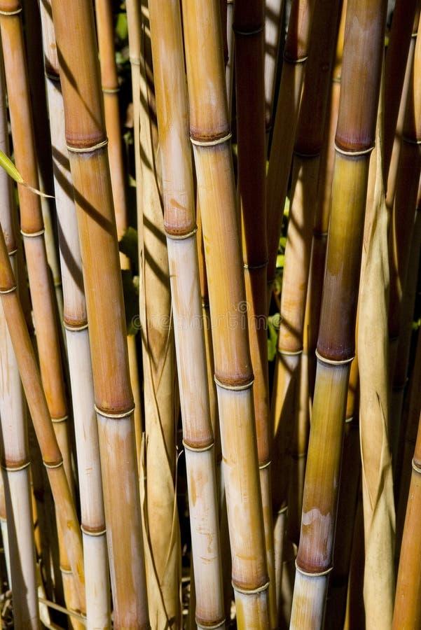 bamboo заводы стоковая фотография rf