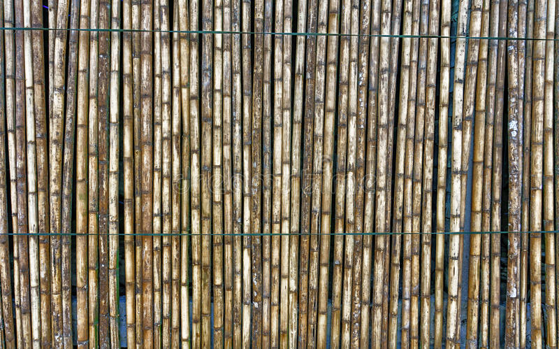 bamboo загородка стоковые изображения rf