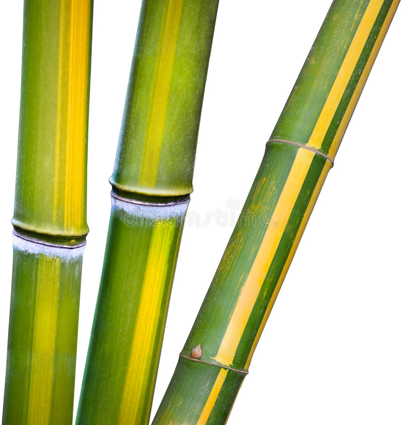 bamboo зеленый желтый цвет стоковые изображения
