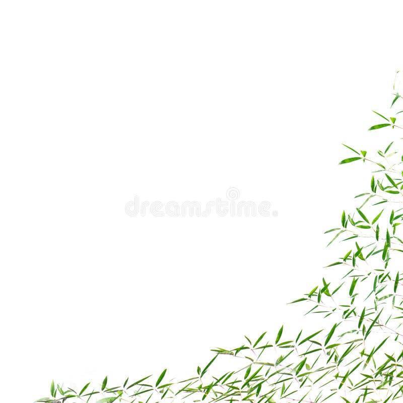 bamboo листья рамки стоковые изображения