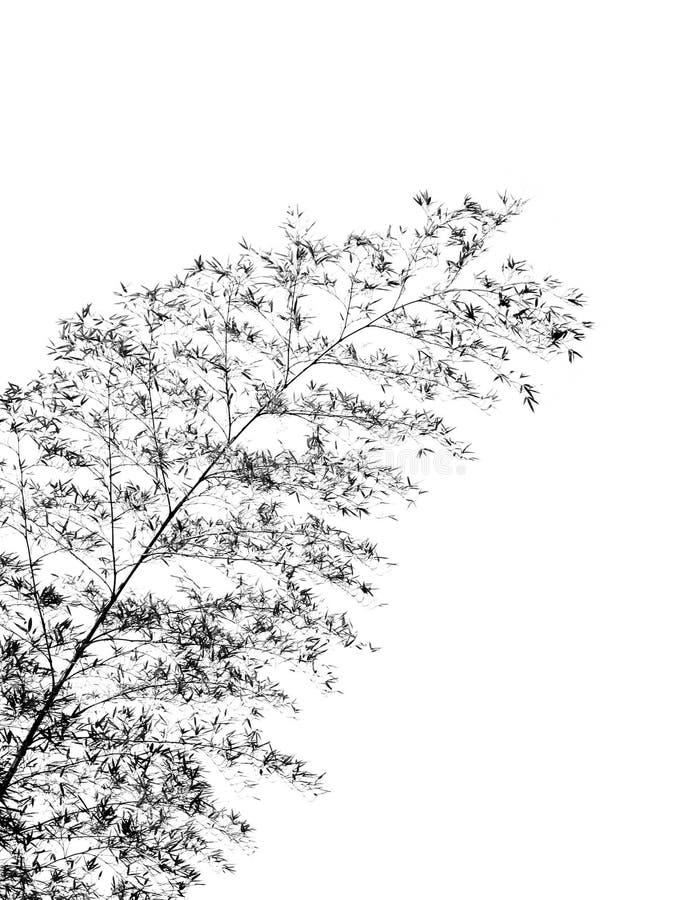 bamboo пошатывая вал стоковые фотографии rf