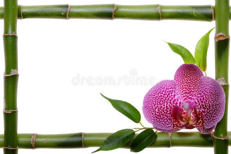 bamboo рамка стоковое изображение rf