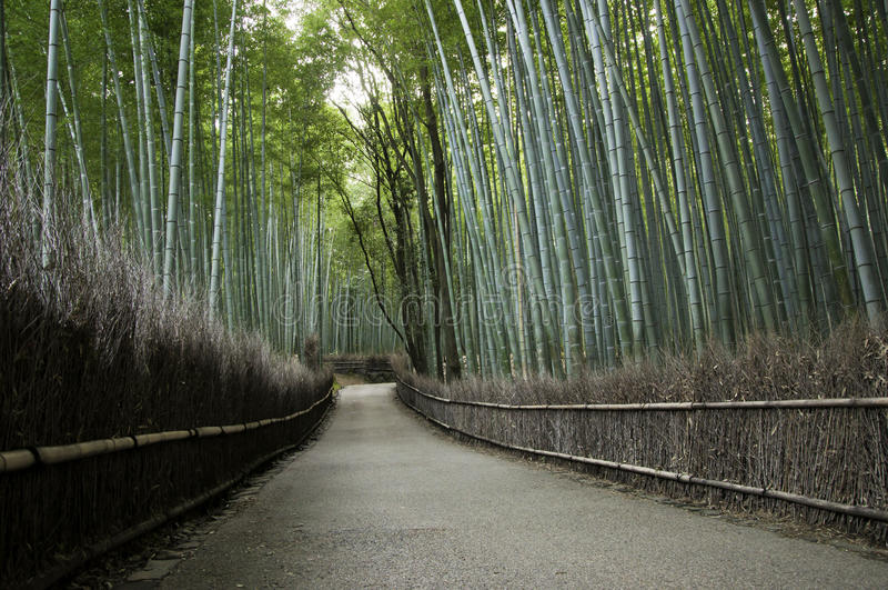 Bamboo роща в Arashiyama в Киоте, Японии стоковая фотография rf