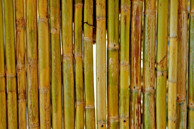 bamboo стена сбора винограда стоковые изображения rf