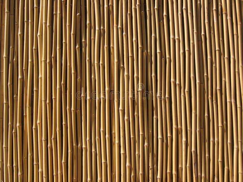 bamboo стена стоковые фотографии rf