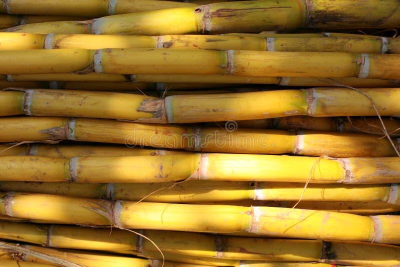 bamboo стена стоковая фотография