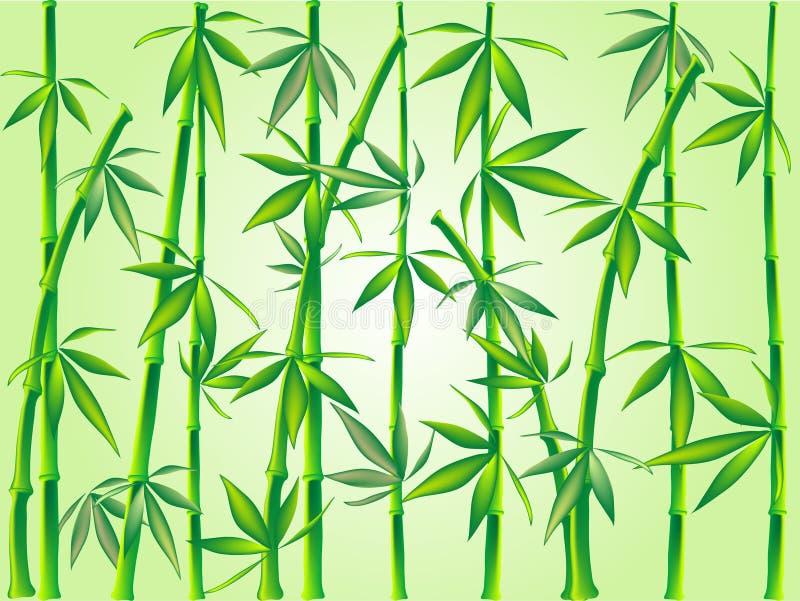 Bamboo royalty free illustration