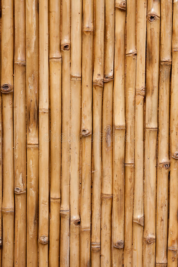 Bamboo. Background texture with columns of wood