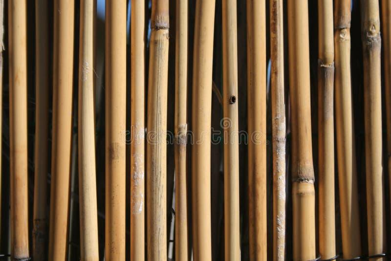 Download Bamboo Royalty Free Stock Image - Image: 1144176