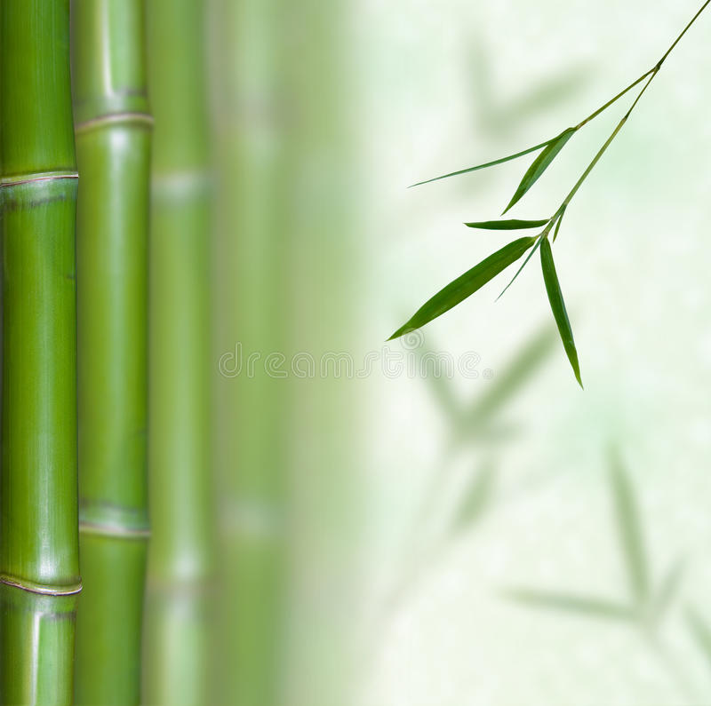 Download Bamboo stock image. Image of growth, japanese, leaf, gardening - 13414779