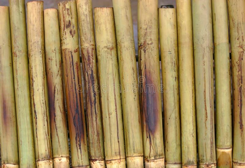 Download Bamboo stock image. Image of dish, malaysia, syawal, festive - 1400047