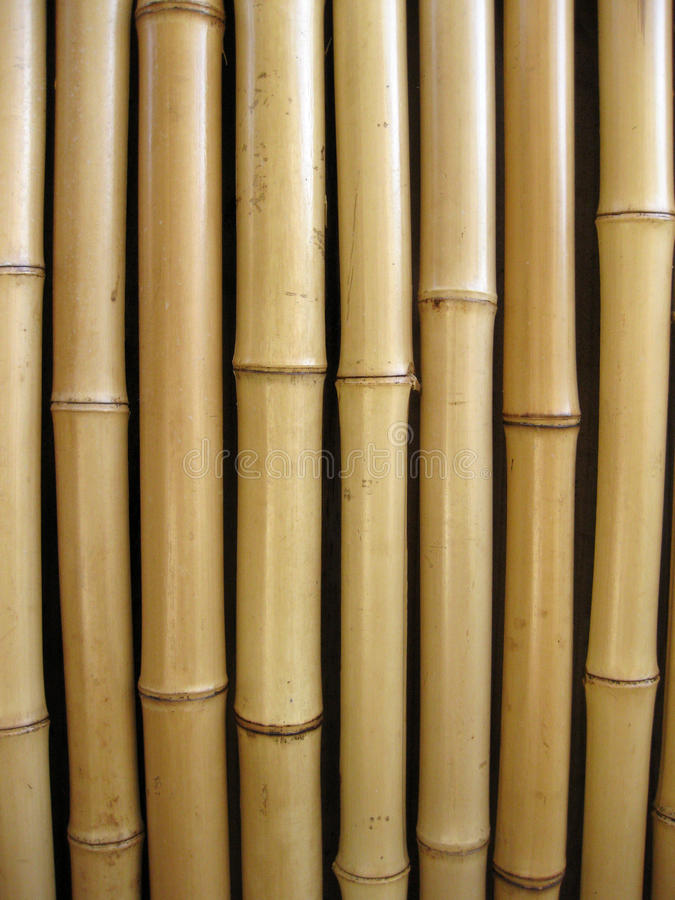 Bamboo. A back ground of thick bamboo royalty free stock photography