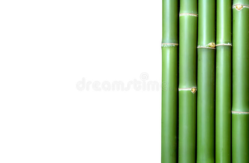 Bamboo. Green vertical chinese bamboo background royalty free stock images