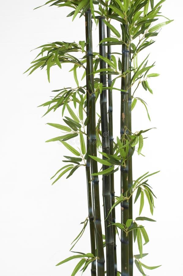 Bamboo. Stalks isolated on white royalty free stock photos