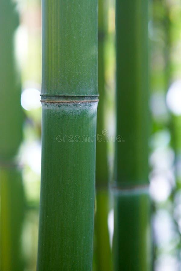 Free Bamboo Stock Photo - 16905790