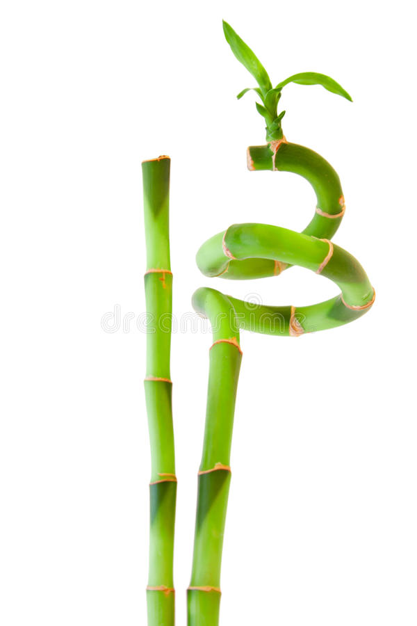 Download Bamboo stock photo. Image of green, freshness, colour - 17247830
