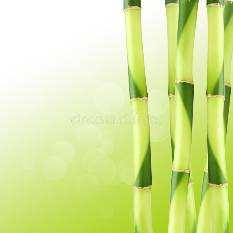 Bamboo. Green background made of Bamboo stock image