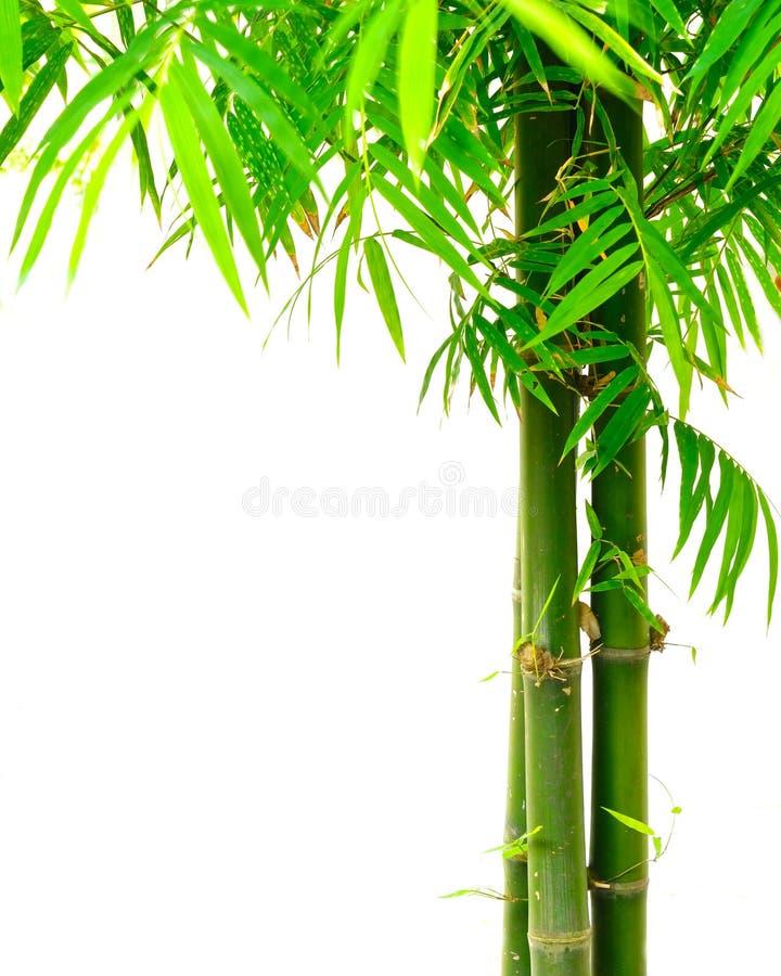 Download Bamboo stock image. Image of gardening, freshness, feng - 19130699