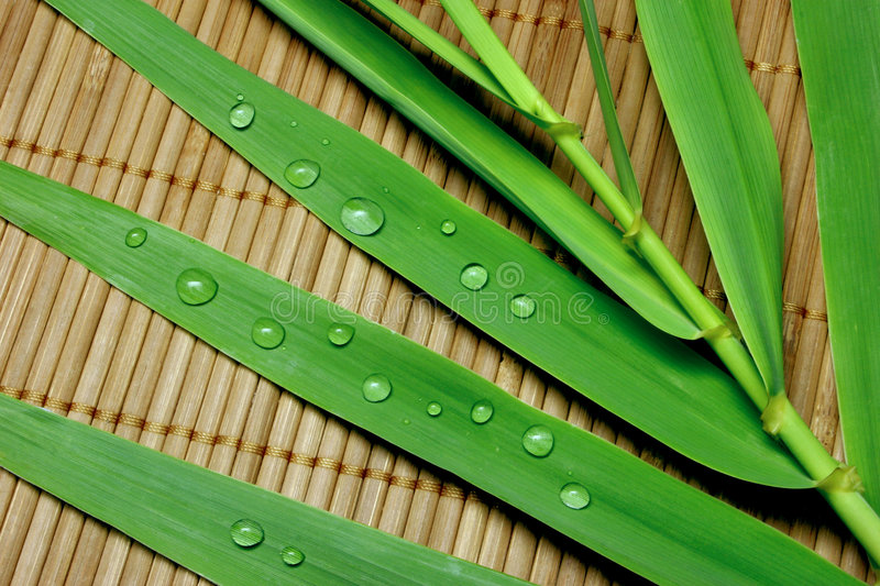 Bamboo. Leaves with water drops on  stick mat
