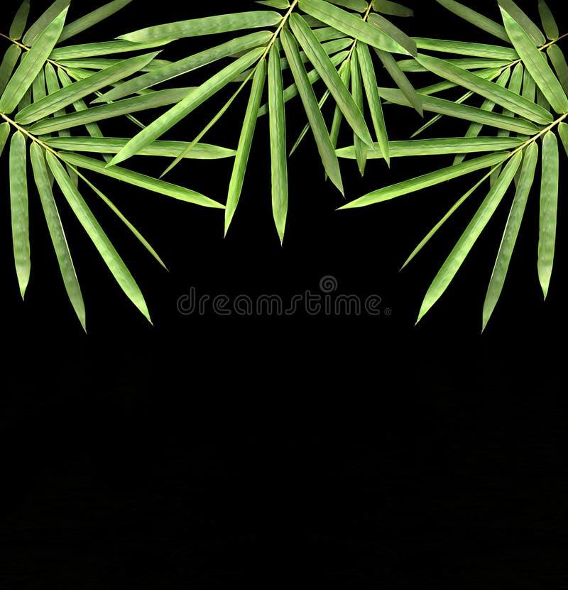 Bamboo. Isolated on black background royalty free stock image