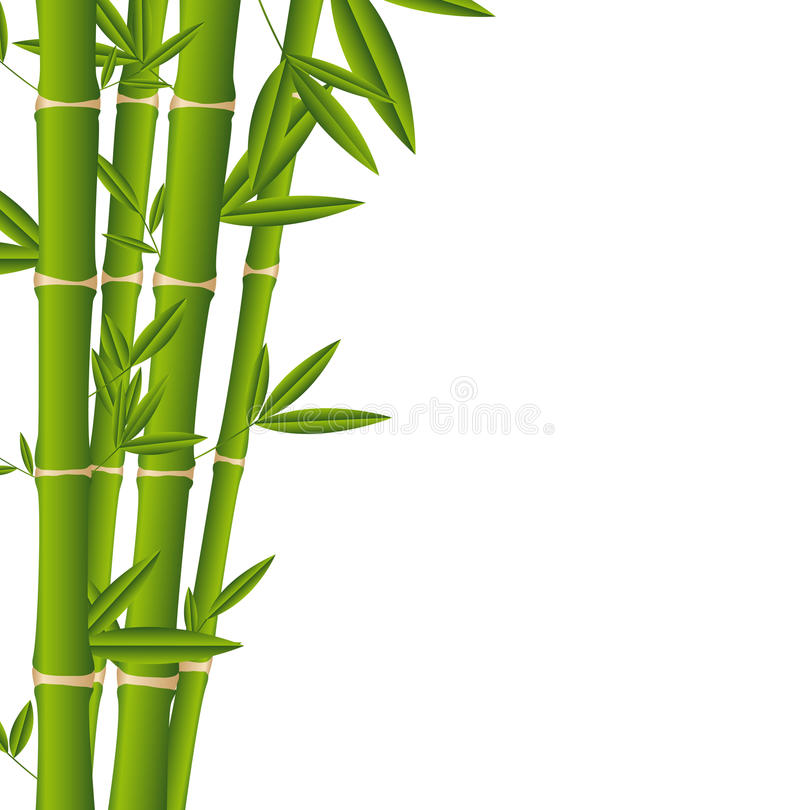 Download Bamboo stock vector. Illustration of japan, isolate, closeup - 24560429