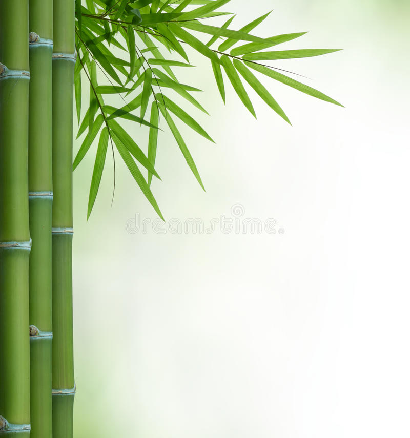 Download Bamboo stock image. Image of leaf, texture, wood, tree - 25488377