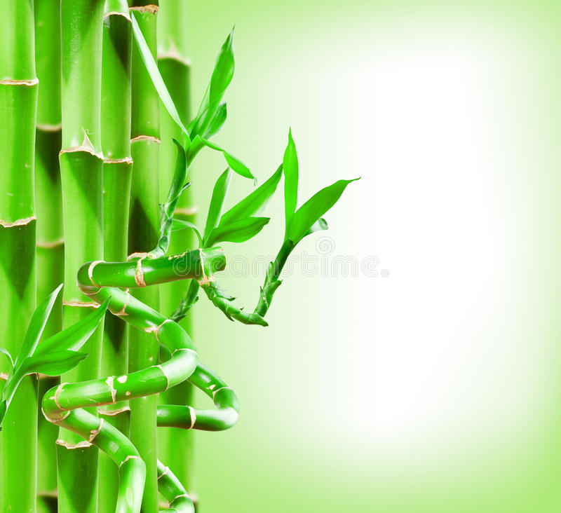 Download Bamboo Stock Image - Image: 26807021