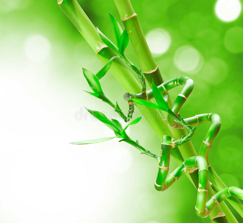Download Bamboo stock illustration. Image of close, luck, green - 26807044