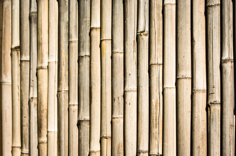 Download Bamboo stock image. Image of multi, full, colored, copy - 29014625