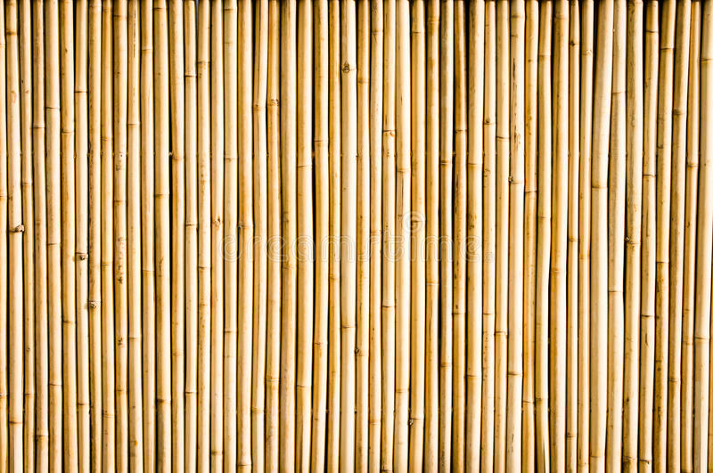 Download Bamboo stock photo. Image of botany, close, branch, material - 29271386