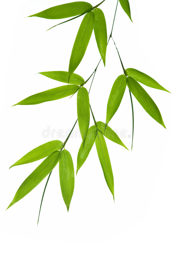 Free Bamboo Stock Images - 3340564
