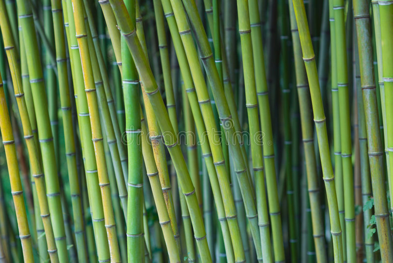 Download Green bamboo stalks stock image. Image of yellow, background - 4337983