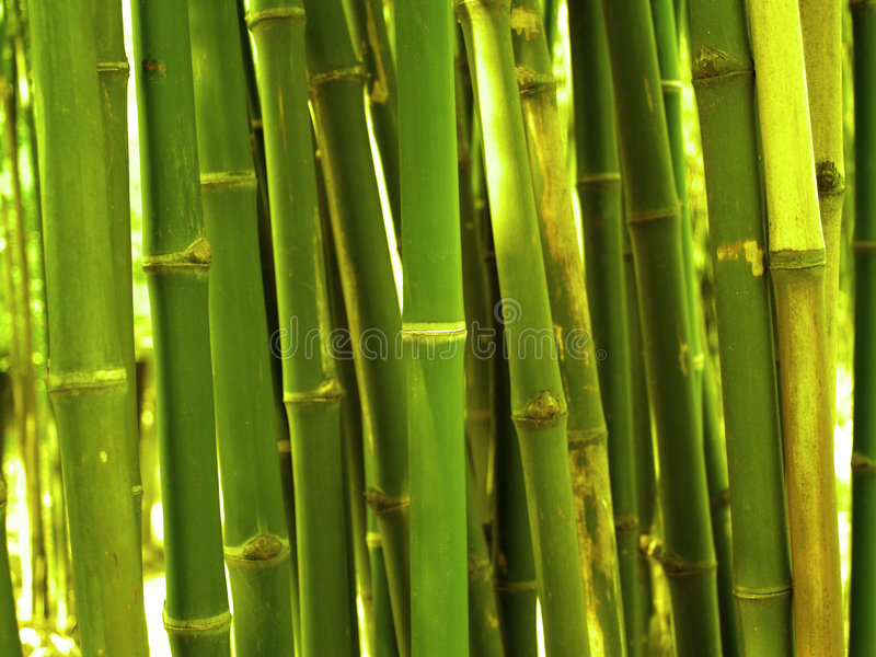 Download Bamboo stock image. Image of trees, field, leaves, yellow - 494281