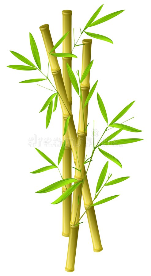 Bamboo. Illustration of bamboo branches isolated on white