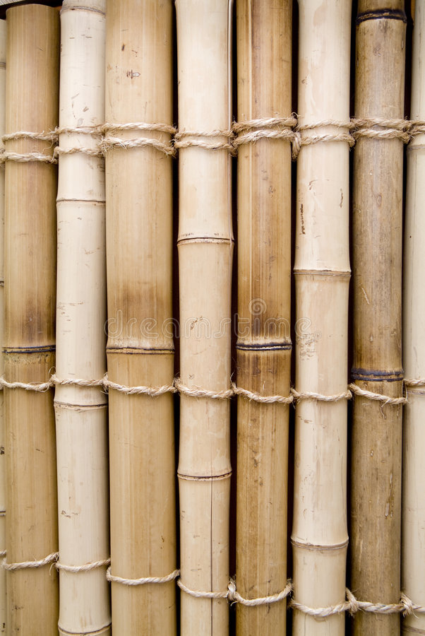 Download Bamboo Royalty Free Stock Image - Image: 5955396