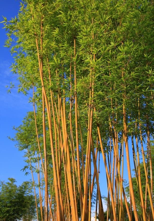 Free Bamboo Stock Photos - 5962343