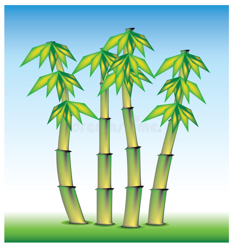Bamboo. From asi, set in vector mode vector illustration
