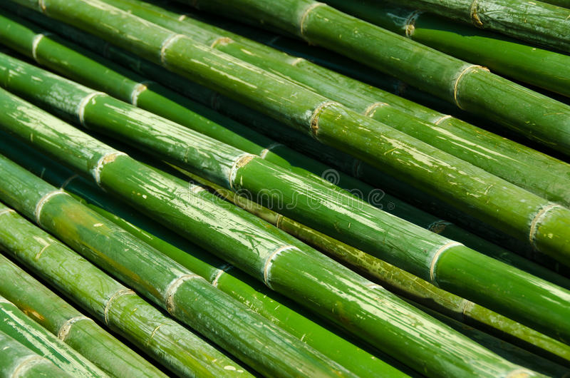 Bamboo-02 fotografia stock libera da diritti