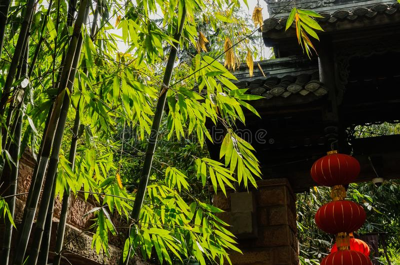 Bamboo at ancient Chinese gate in sunny spring afternoon. Bamboo at the ancient Chinese gate in sunny spring afternoon,Chengdu,China stock image