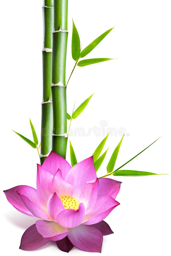 Free Bamboo And Lotus Flower Stock Photos - 15810513