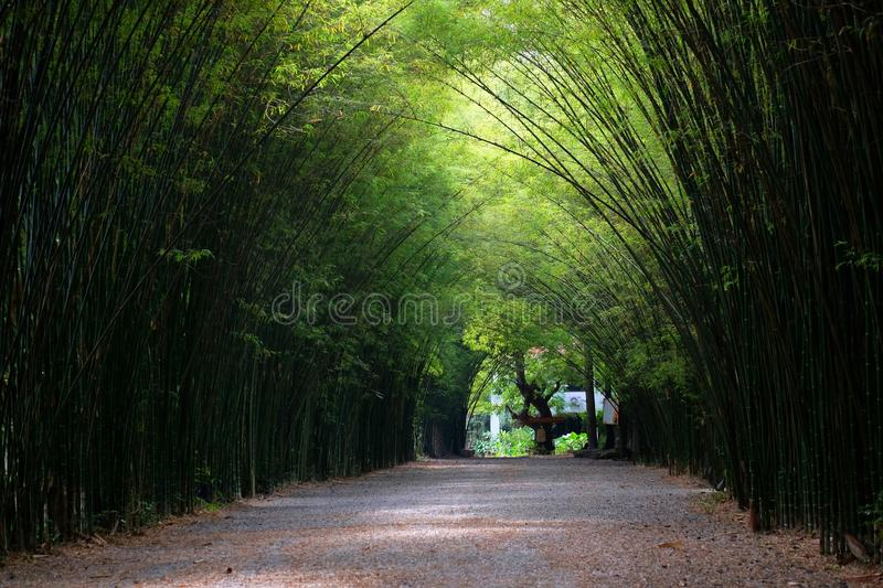 Bamboo arch in Thailand royalty free stock images