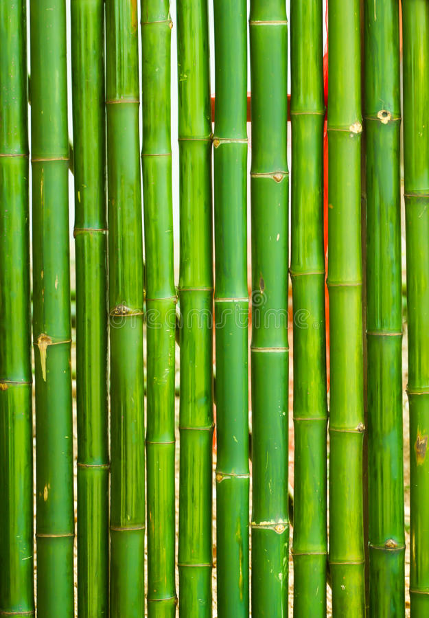 Bamboo arranged stock images