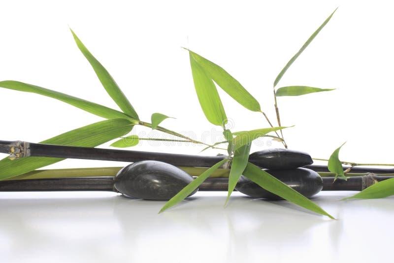 Download Bamboo arrangement stock image. Image of flora, botany - 8657049