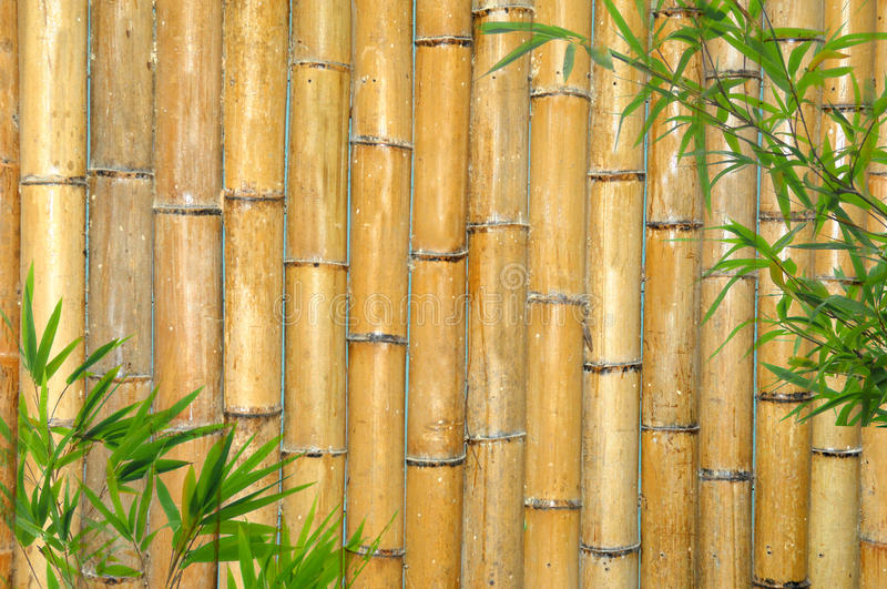 Download Bamboo Background stock photo. Image of copy, orientle - 10133124