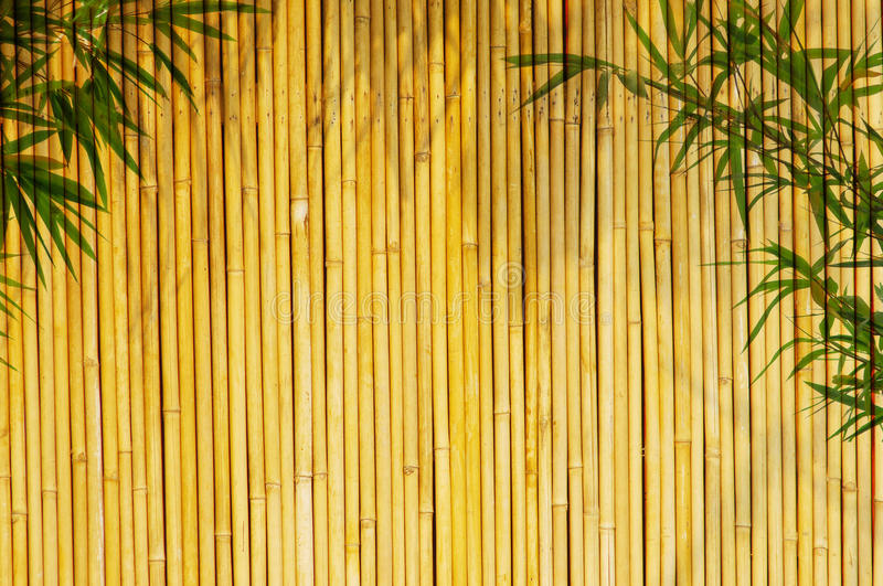 Download Bamboo Background stock photo. Image of leaves, green - 10133228