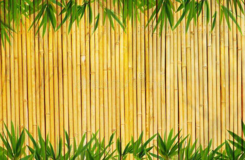 Bamboo Background Stock Photo Image Of Nature China 10634374